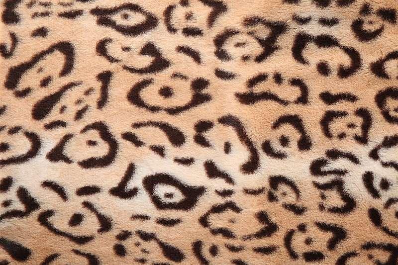 Peach_Leopard