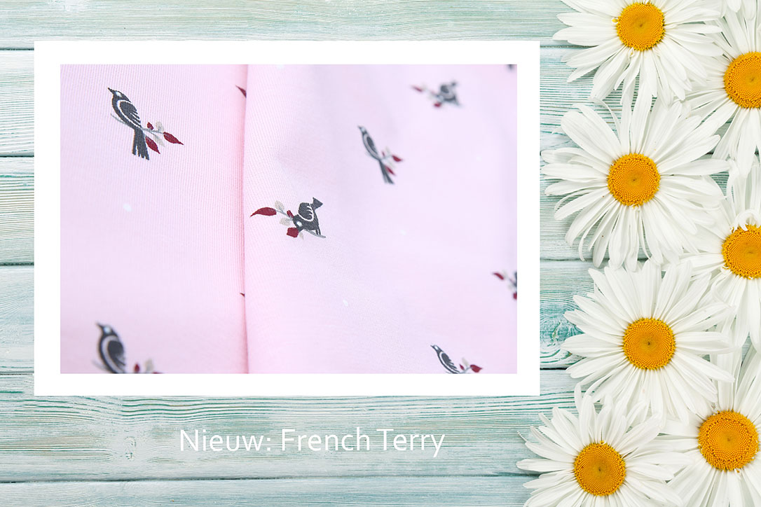 Garden chamomile flowers on wooden background. Top view with copy space